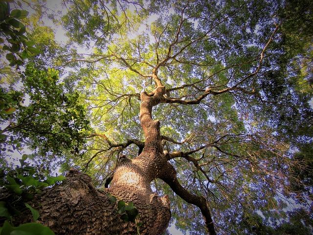 slunca na stromě